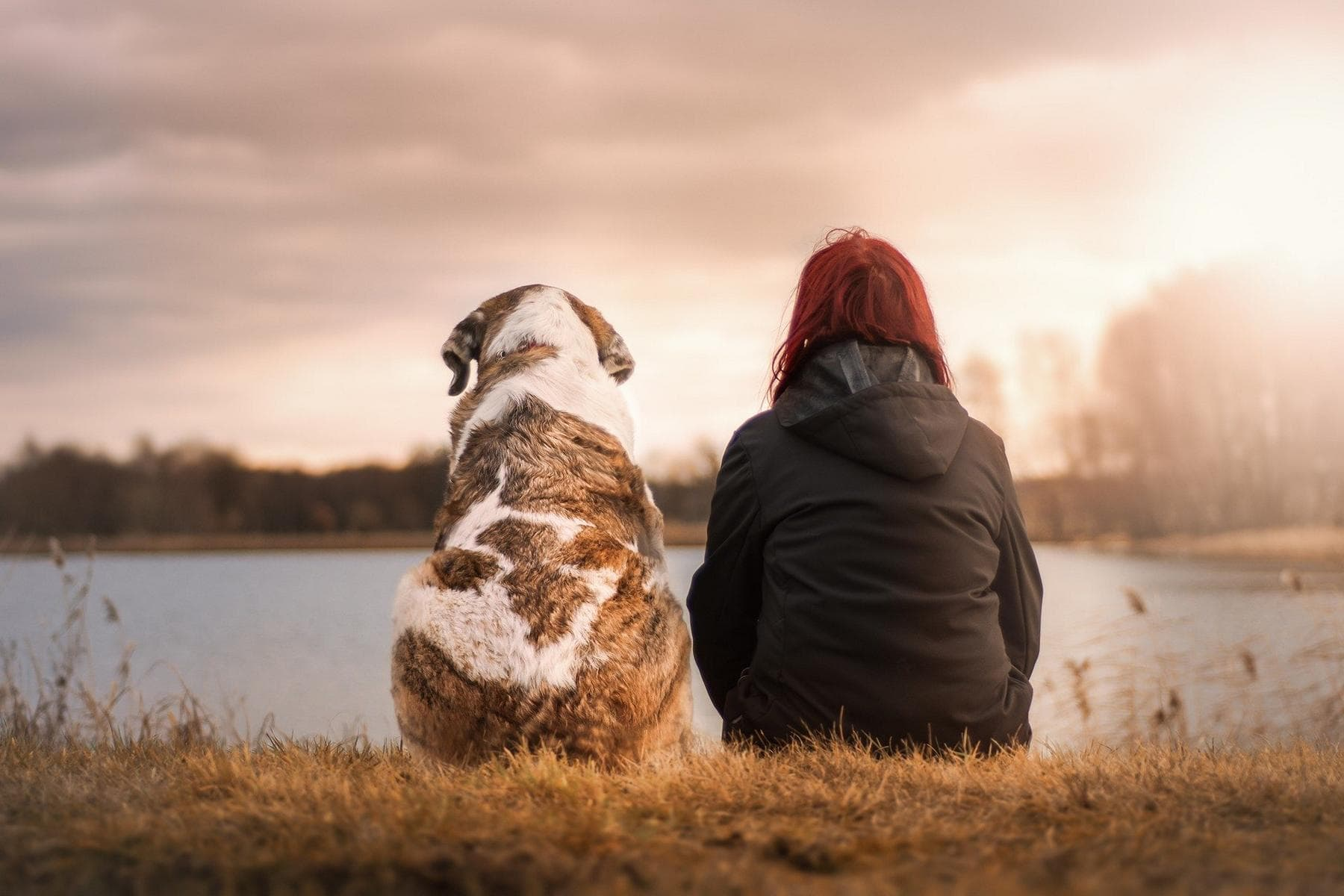 BGH-News: Kündigung des Mietverhältnisses wegen freilaufender Hunde